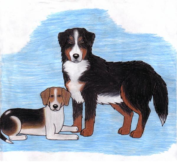 Bernese Mountain Dog Rescue Groups