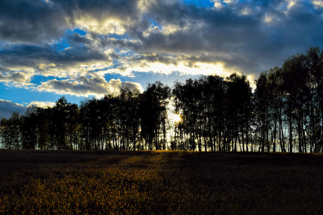 Sunset in the forest 2 by stas-gavrik
