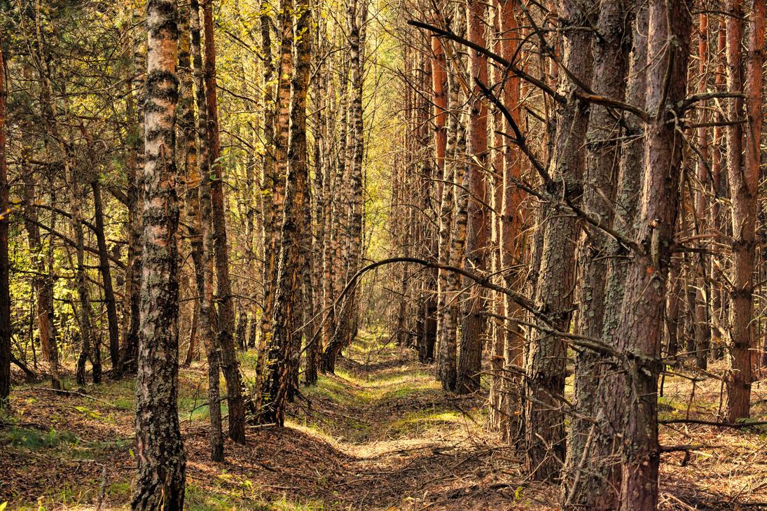 Forest by stas-gavrik