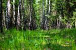 nature in bright green color