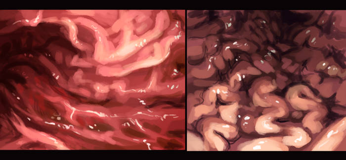 Stomach Studies by VoraciousPanda