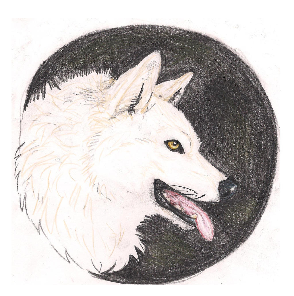 A white wolf by Crazywolfs