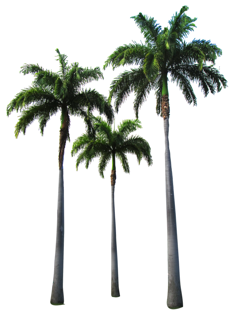 Clear Palm Tree Iphone Case