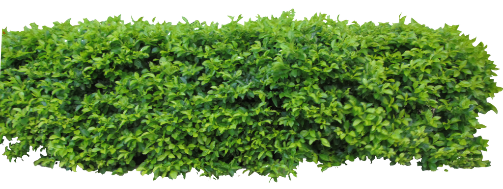 Hedge1 Png By Owhl Stock On Deviantart