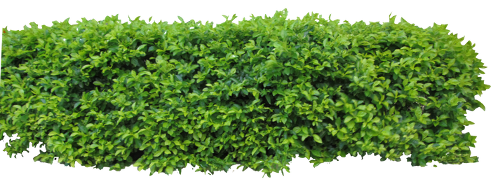 Hedge1 png