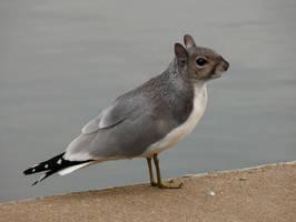 squirgull by hybridjosto