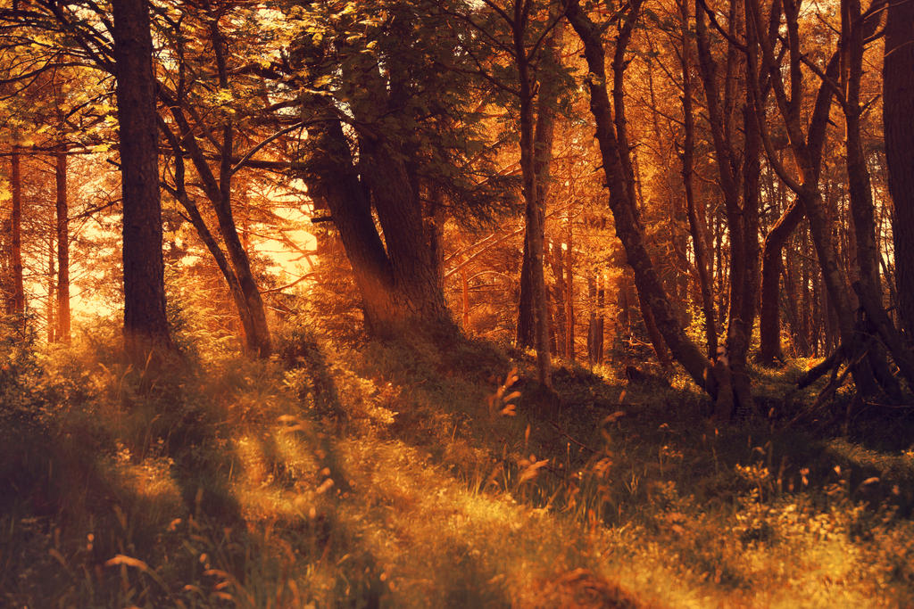 Forest Glade by Besaid