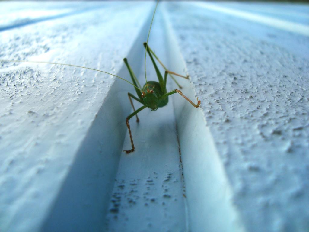 Grasshopper by YuriNomNom