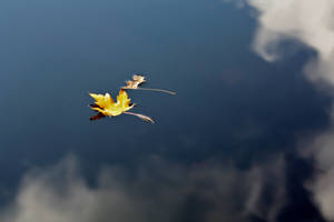 Autumn '11 - 3 by LisaMacNewton