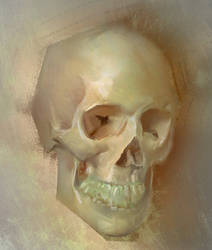 Skull from life