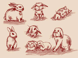 Day 1 - Bunny study by Anspire