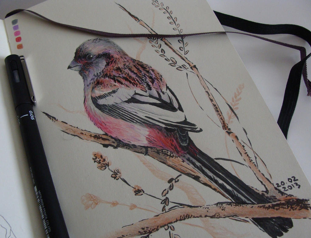 Long-tailed Rosefinch by tangerine-blossom