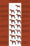 Horse Tutorial