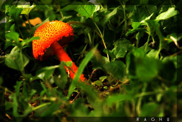 Hidden beauty again....... by raghunandan