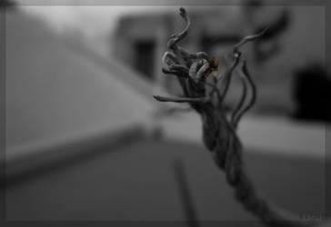 spidey by raghunandan