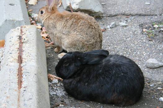More Bunnies Go Meow