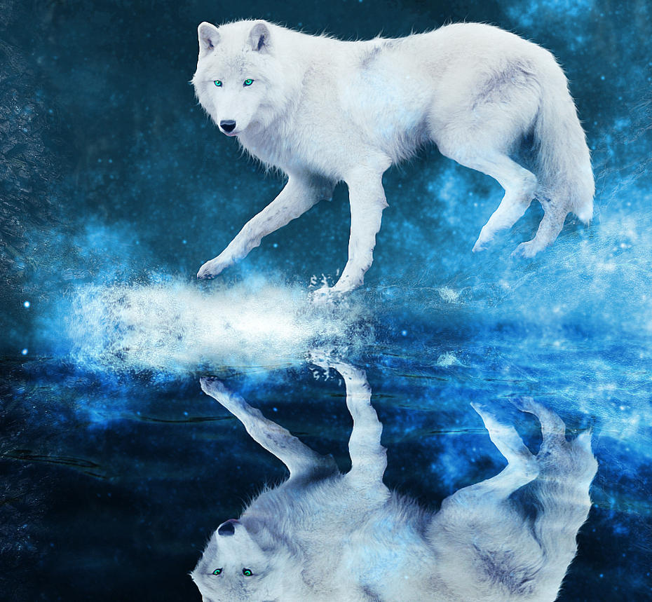 A Wolf's Dream World by tahbikat