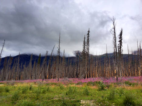 Kootenay Plains Forest Fire