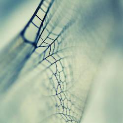 Fragility by x-a-e