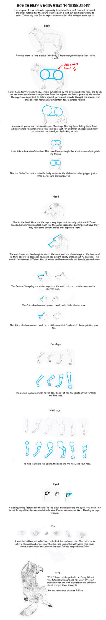 how to draw a wolf tutorial