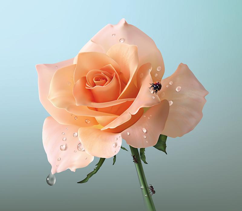 Rose by alegas