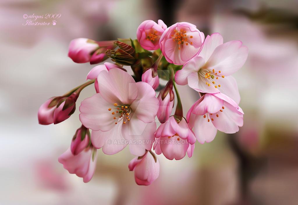 Spring by alegas