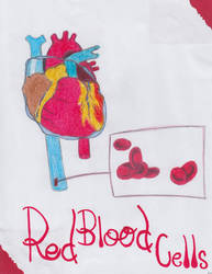 Red Blood Cells and Heart
