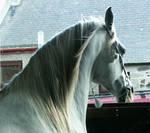 Horse stock 5
