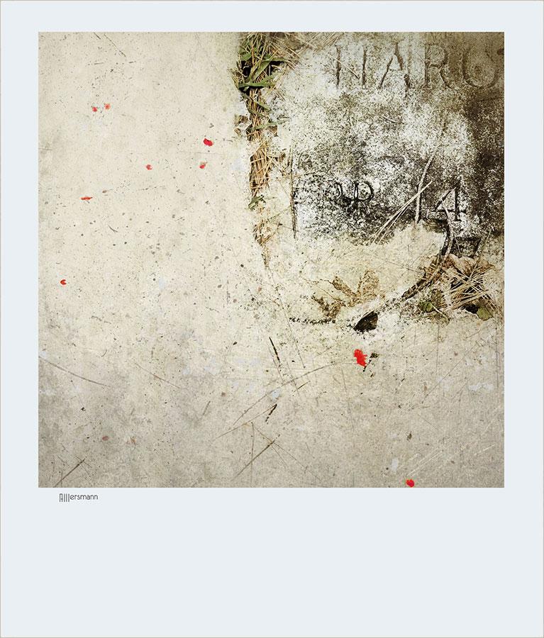 HARO by arminmersmann2