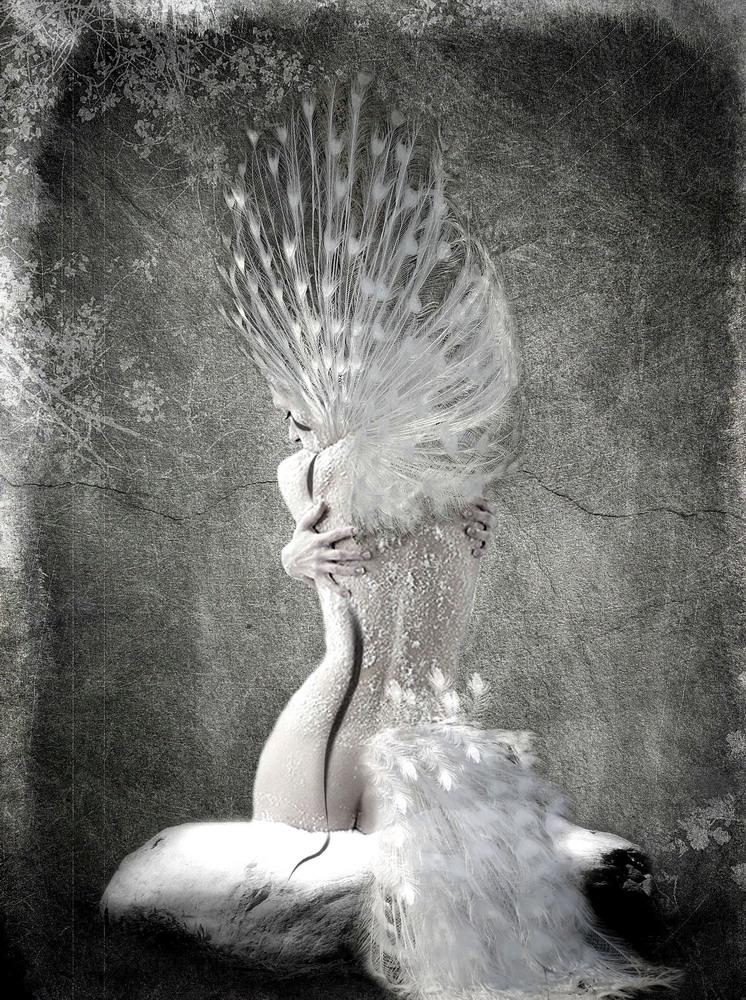 White Peacock By Owel On Deviantart