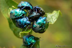 Green Iridescent Bug by abravewolf