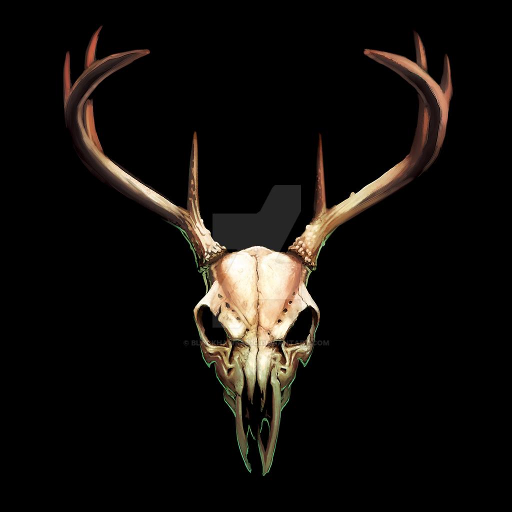 Deer skull by BlackHawk45LC