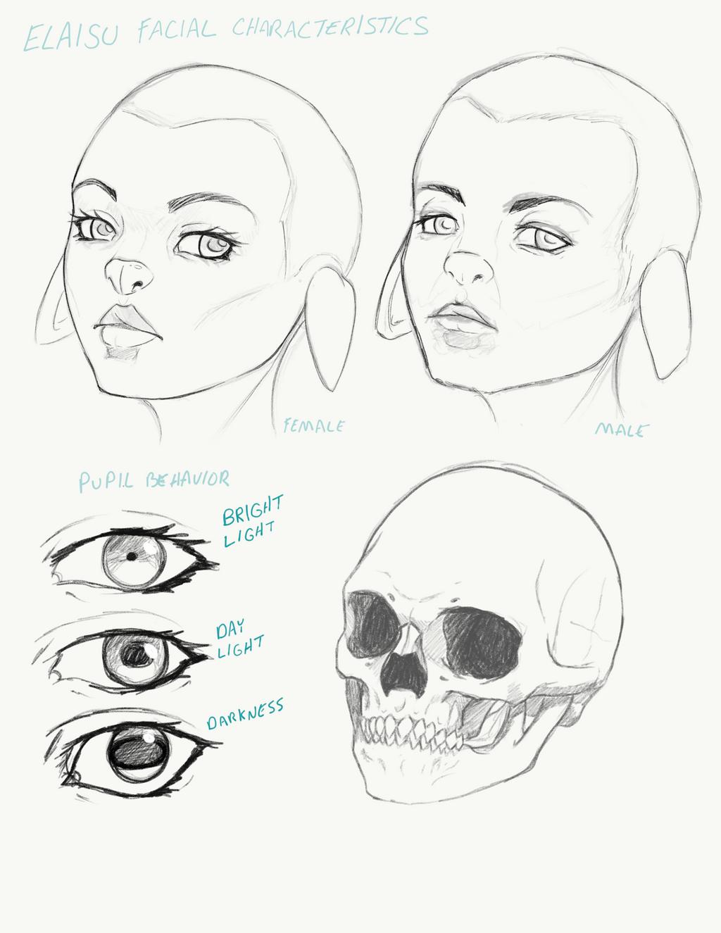 Elaisu racial facial features sketches by BlackHawk45LC