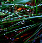 After rain by aninur
