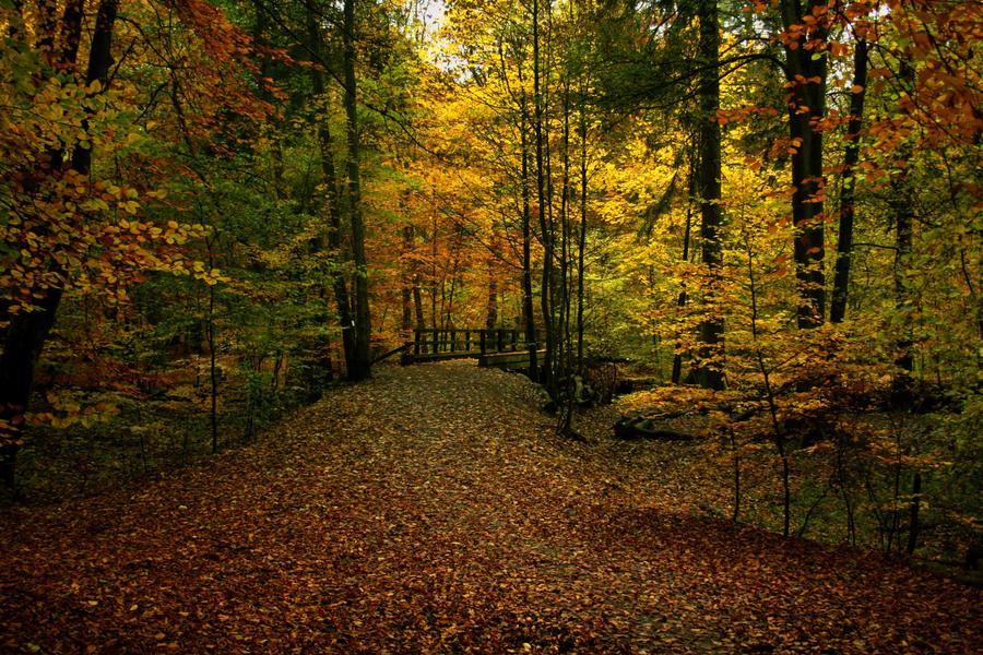 Autumn bridge by sahk99