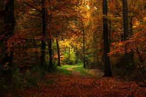 Autumn enchantment by sahk99
