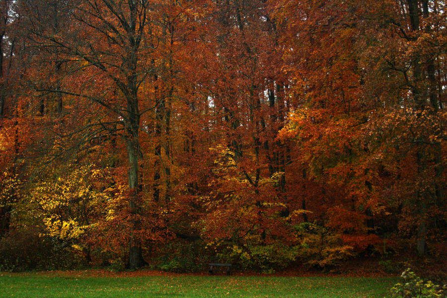 Bench vs autumnal woods by sahk99