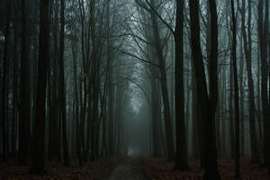 Das Streben nach Licht by sahk99