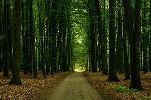 Forestal summer path by sahk99