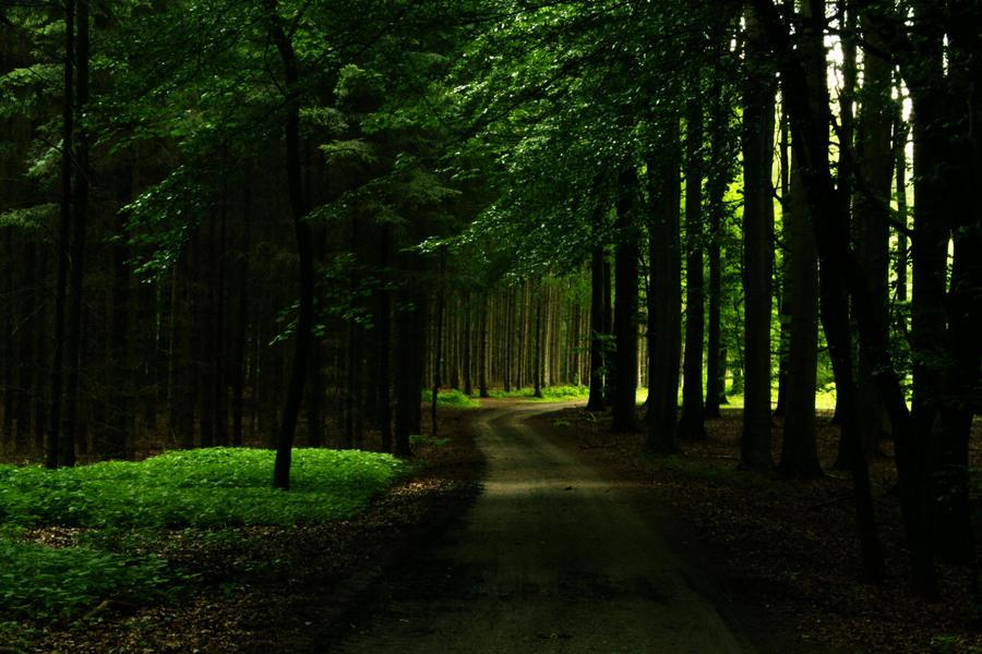 Auf dem Weg zum Licht by sahk99