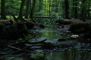 In den Tiefen des Endernwaldes by sahk99