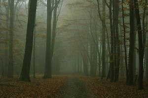 Auf dem Nebelpfad by sahk99