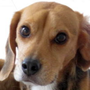 Manudog's Profile Picture