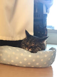Sleeping Pauhiro and Pitchorni