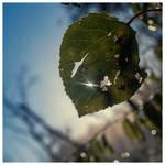 Nature's Sparkles