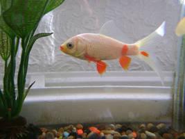 fish side stock 1 by EmzazasStock