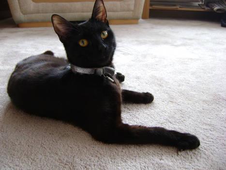 black cat pose 4