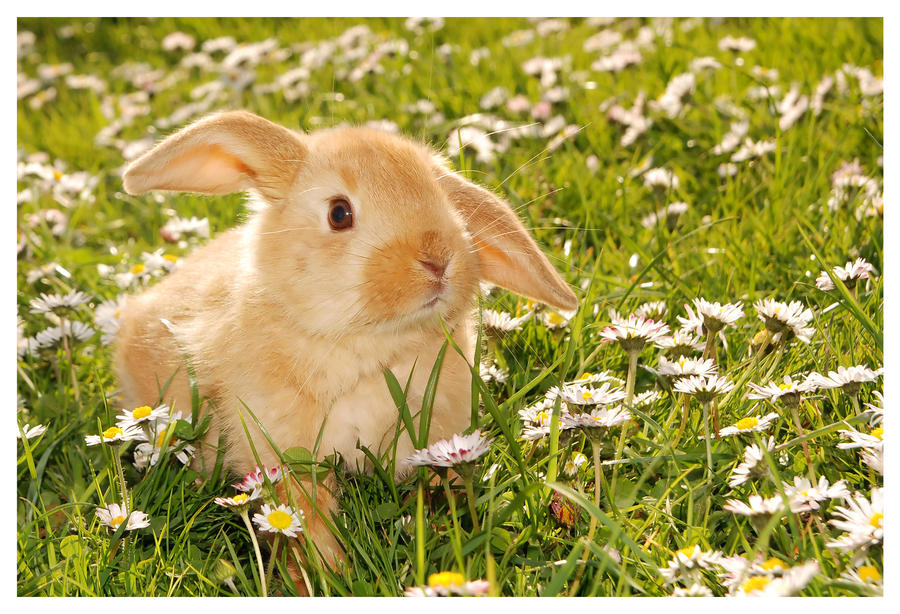 Baby Rabbit by Squadz2000