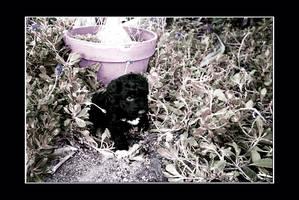. Black in the Garden . by Darke-Lady
