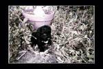 . Black in the Garden .